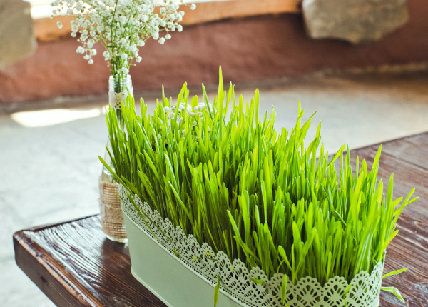 tuin-binnenshuis-groen-gras