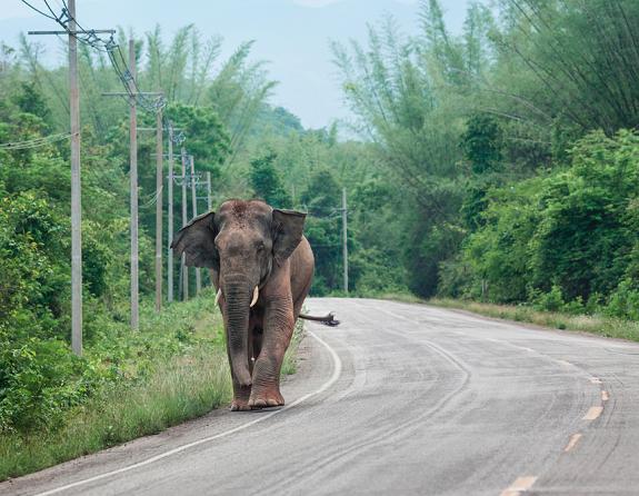 Kaeng Krachan National Park olifanten