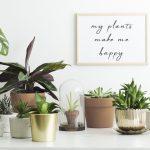Woontrend: tover je interieur om tot een Urban Jungle